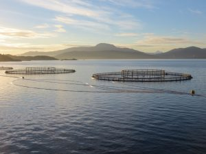 salmon-farm-cages-source-rcox